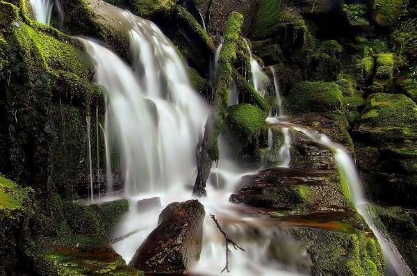 mossy fall by davidcollins