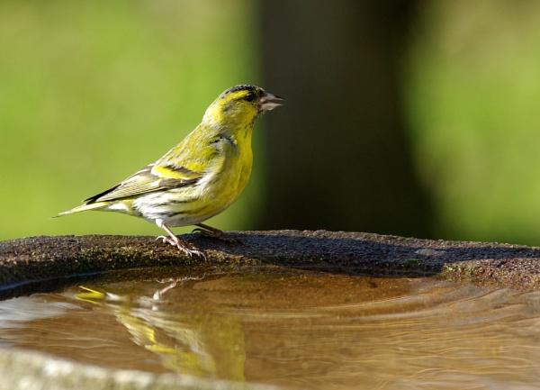 Bathtime by kenp