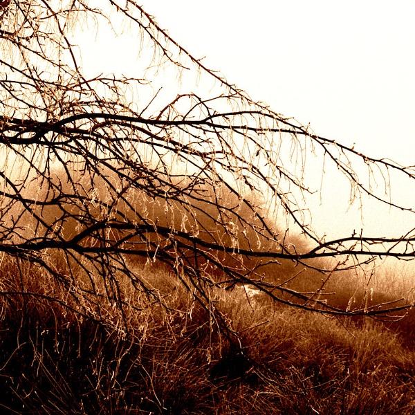 Wet Grasp by Callanan