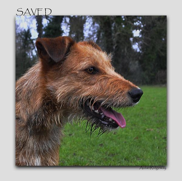 Saved by Ridgeway