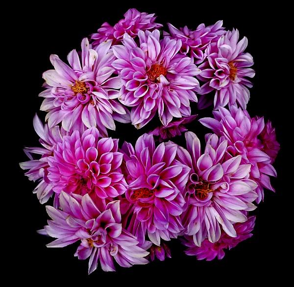 Bouquet by derekv