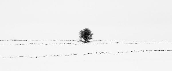 Snowy Fields 3 by WilliamRoar