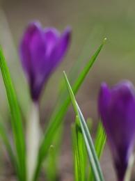 Spring of DOF