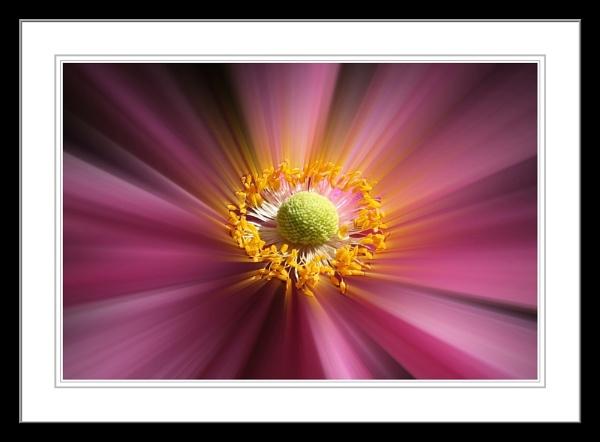 Anemone blur by bayleaf1
