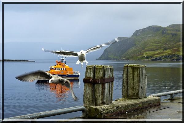 Two gulls by EddyG