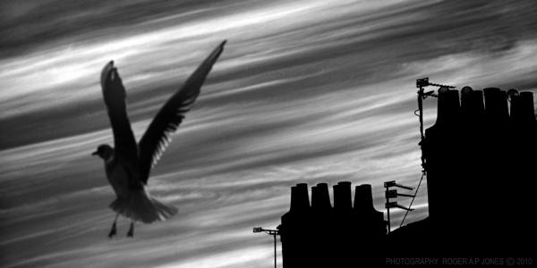 Urban Gull by RAPjones