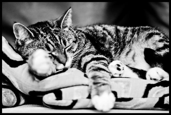 Sleepy by rachelkatherine