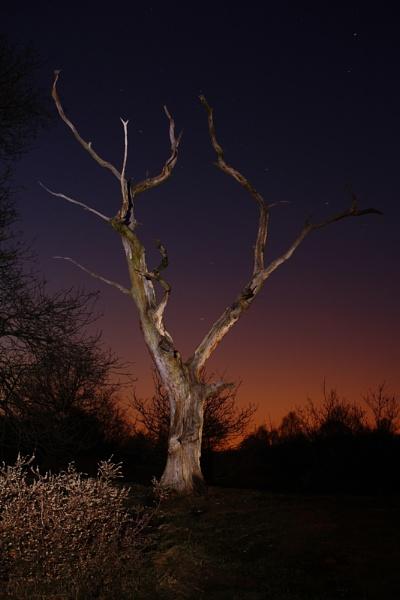 Tree at Night by jembo