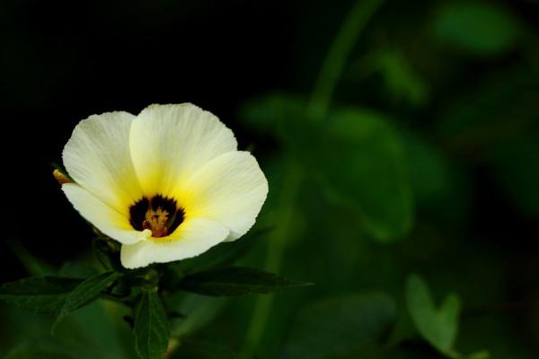 Yello flower by maheshguild