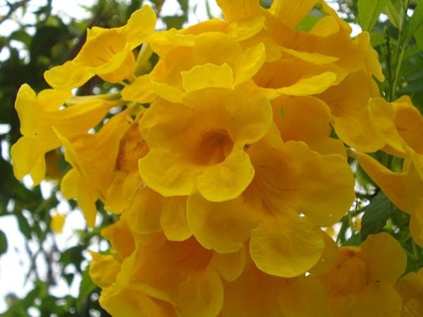 Flores em Taubaté - SP - Brasil by fotografiataubate