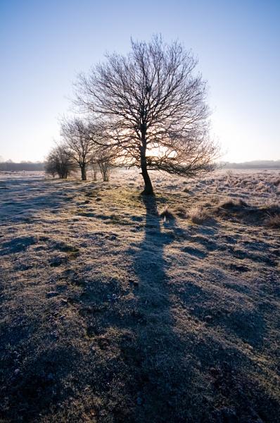 Jack Frost by StuartAt