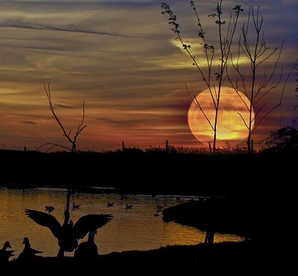 Moon rising by BarbaraB