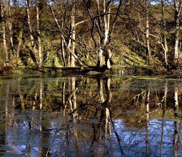 reflections by dazloz