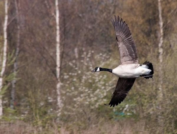 In Flight by Peteward