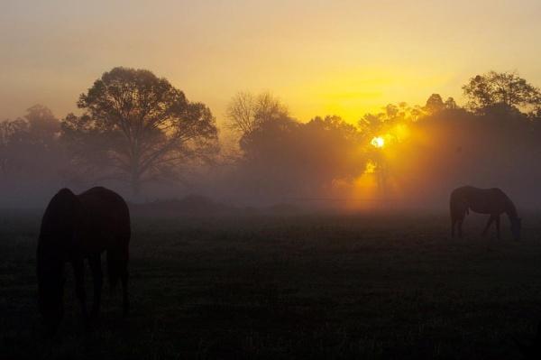 Spring Morning in Florida by wsteffey