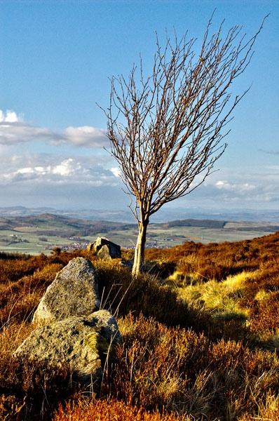 Lone Tree by waineswitch