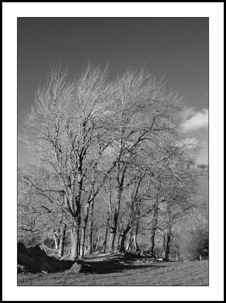 Side lit Trees by Willmer