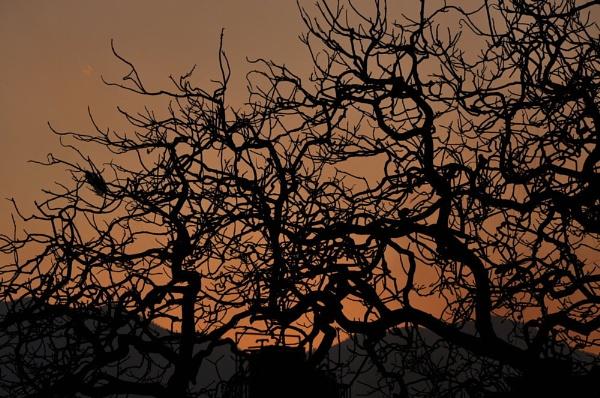 tree by phal