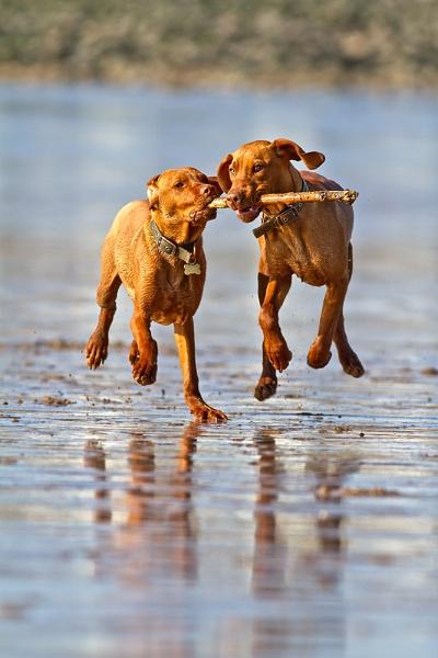 Monty & Oscar by paulrosser