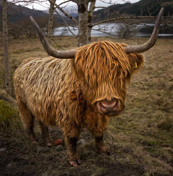 Highlander by chazcherry