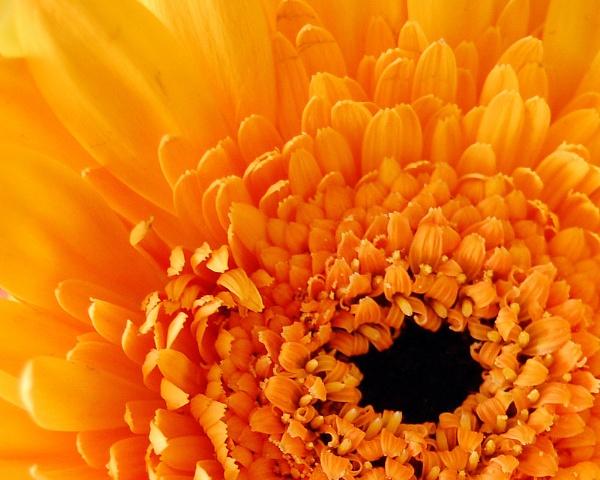 flower power by linda68