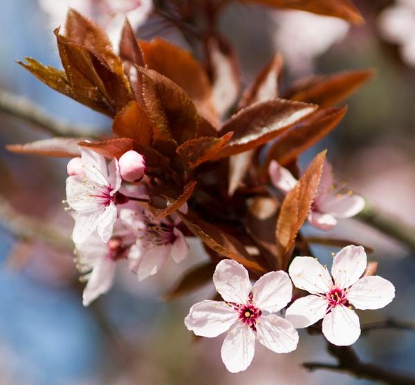Bouquet by mrpjspencer