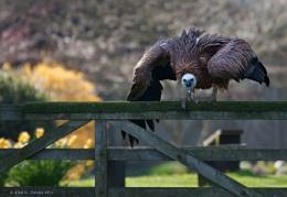 The Gatekeeper!