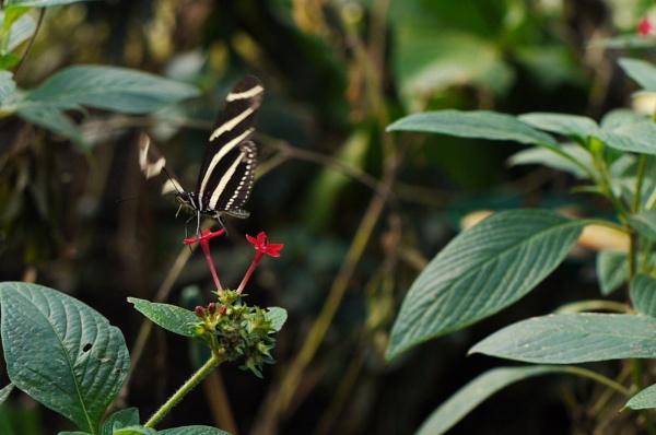 Flutter-by by ceri_baxter