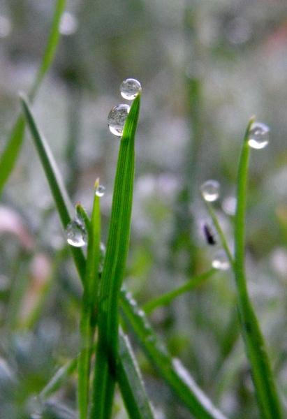 Frozen dew by MingM