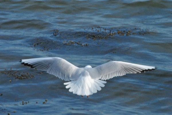 In flight by suekib