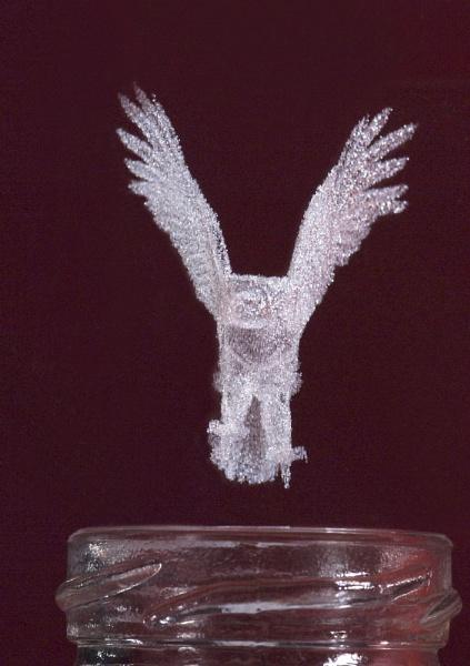 The Eagle has landed by DavidBird
