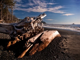 Looking For Driftwood
