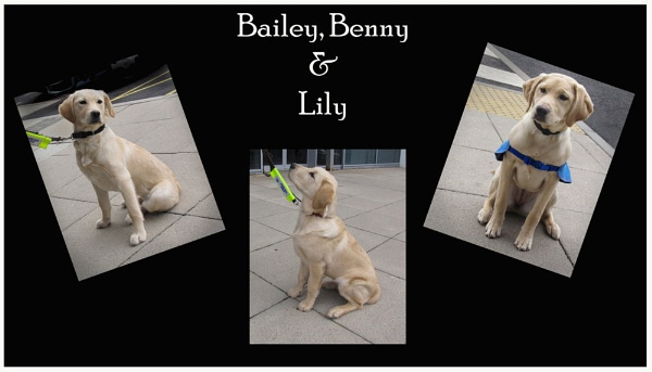 Bailey, Benny & Lily by gingerdelight