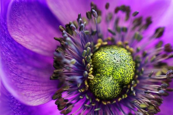 Flower by ENGLISHSKIN