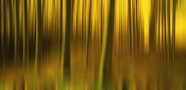 Abstract Forest by big_baboon