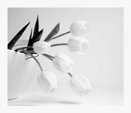 White tulps