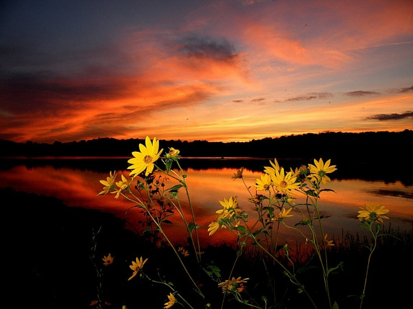 Daisies At Sunset by gregnboutz