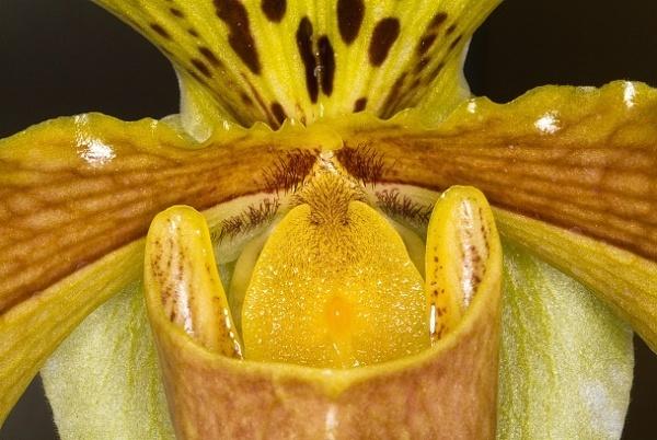 Orchid, second attempt. by dj.lambert