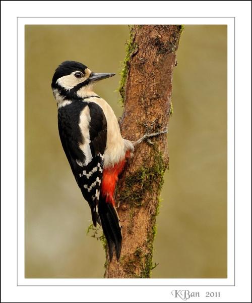 April Woodpecker by KBan