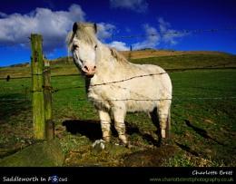 Pots 'n' Pans 'n' Pony