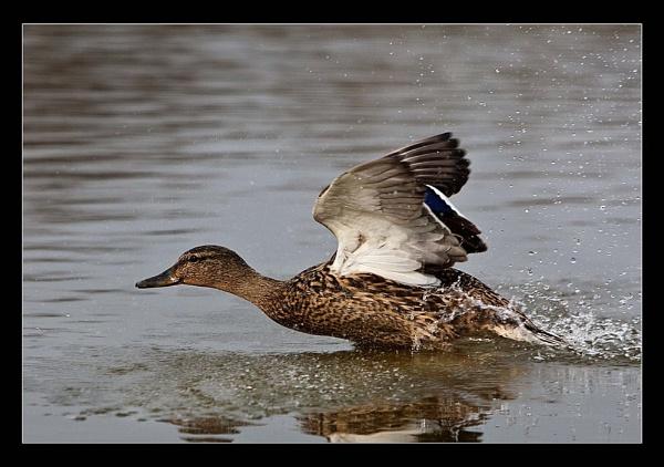 Splash Landing by AMS1
