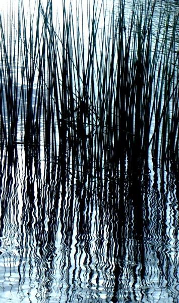 Reeds by carp_27