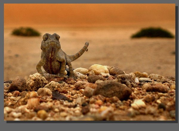 Chameleon by WimdeVos
