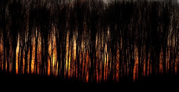 Trees mod by banehawi