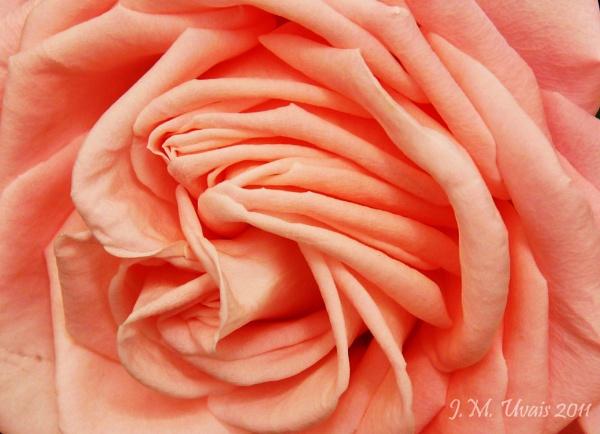 Soft Silky Pink by jmu