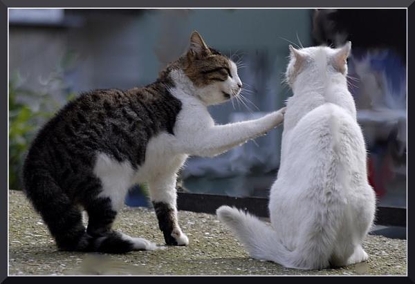 Kediler arasi by izida