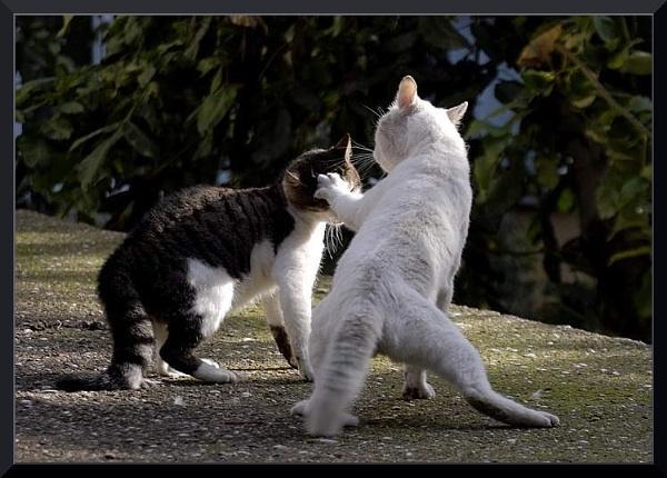 Kediler arasi  *cat defans* by izida