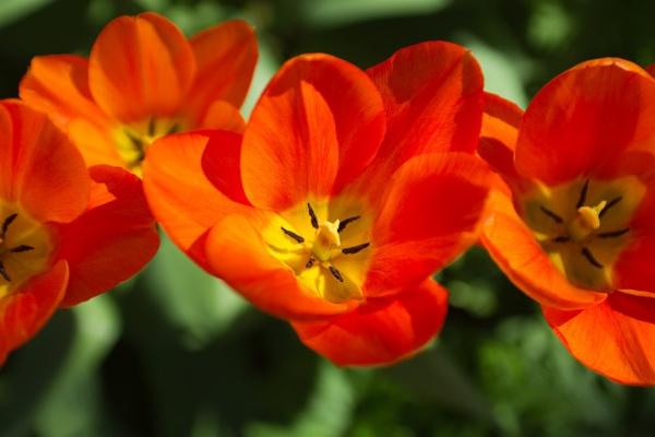 Highdown Flower by mrpjspencer