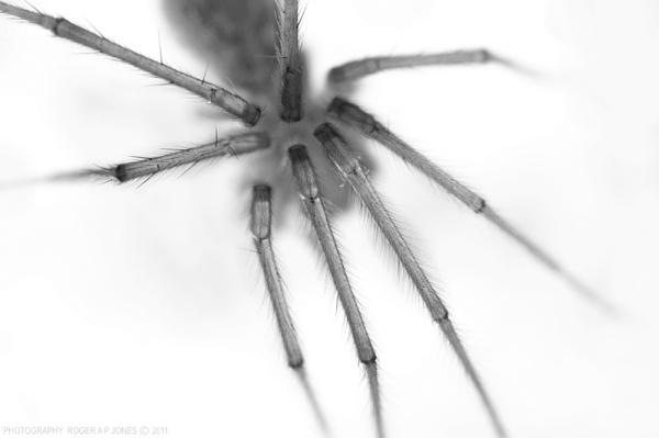 Arachnophilia by RAPjones