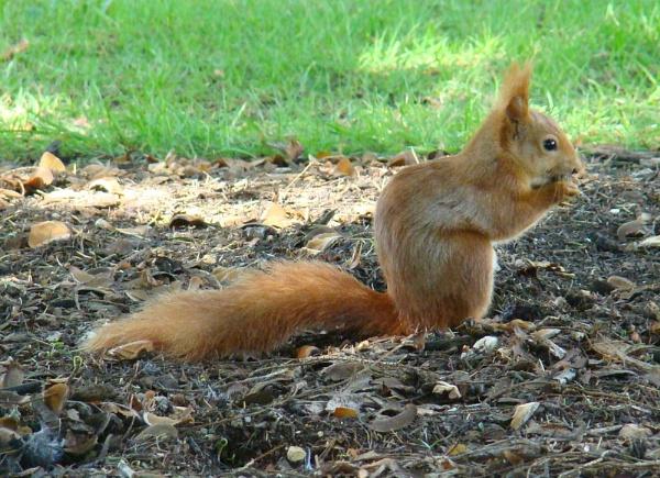 Squirrell by tenerifejohn
